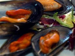 Proliferan mejillones hermafroditas y peces bisexuales en Vizcaya