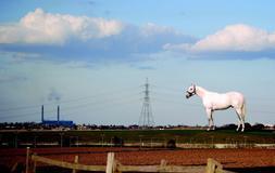 Un caballo gigante dará la bienvenida a quienes crucen el Canal de la Mancha