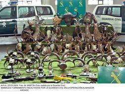 Desarticulada una red que organizaba cacerías furtivas de todo tipo de animales en Ávila