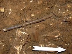 El hallazgo de una flauta de 35.000 años confirma que los primeros europeos ya disfrutaban de la música