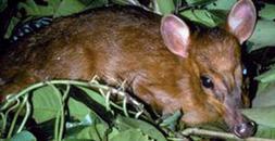 350 nuevas especies en el Himalaya