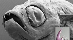 Las especies más impactantes descubiertas en 2009
