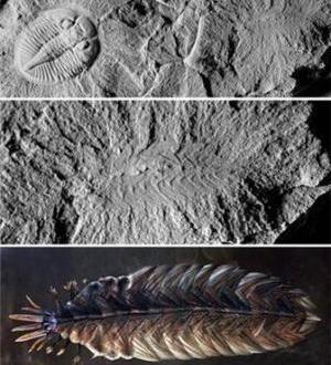 Uno de los fósiles más extraños del mundo aparece en el centro de Otawa