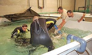 http://www.abc.es/Media/201004/26/tiburon%201--300x180.JPG