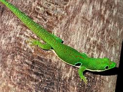 Lagartos y lagartijas, primeros en extinguirse por el cambio  climático