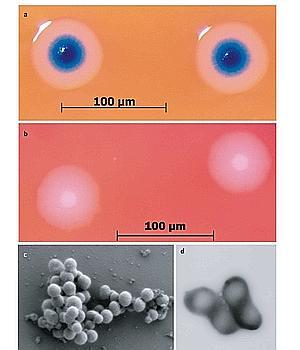 Craig Venter da vida a una célula con un genoma «de laboratorio»