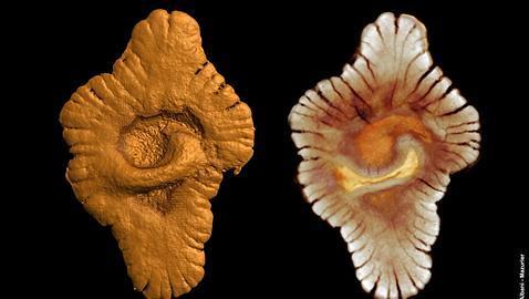 Hallan raras formas de vida compleja de hace más de 2.000 millones de años