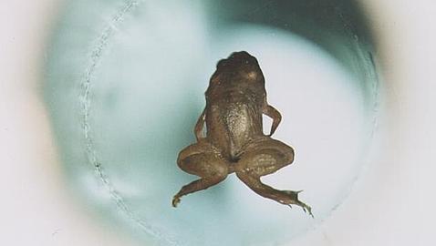 De levitar ranas a premio Nobel