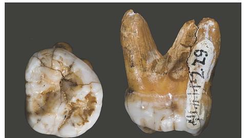 Descubren una «tercera rama evolutiva» de los humanos modernos