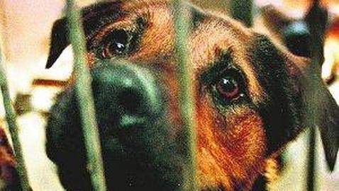 Tortura y mata cachorros y sube los videos a la web
