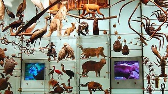 Resultado de imagen de De la misma manera existe la diversidad de formas de vida
