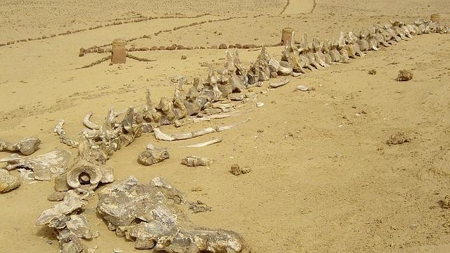Descubren nuevos fósiles de animales marinos en el desierto egipcio