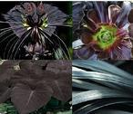 Árboles negros crecen en un mundo con dos soles