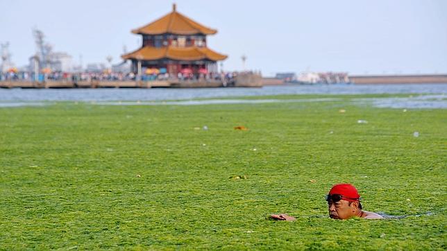 Una invasión de algas amenaza las costas chinas. Algas8--644x362