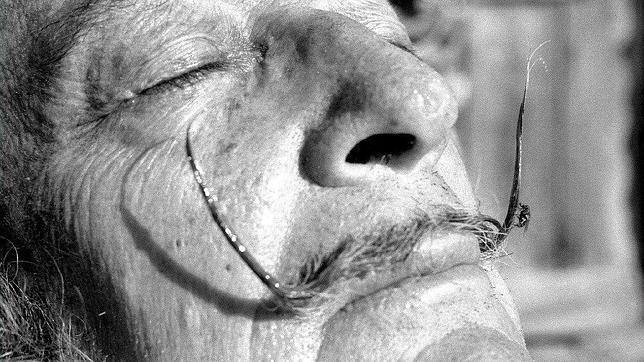 Salvador Dalí, en una imagen sin fechar. ABC