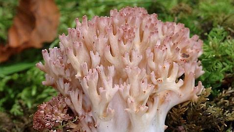 El régimen contra el hongo de las uñas