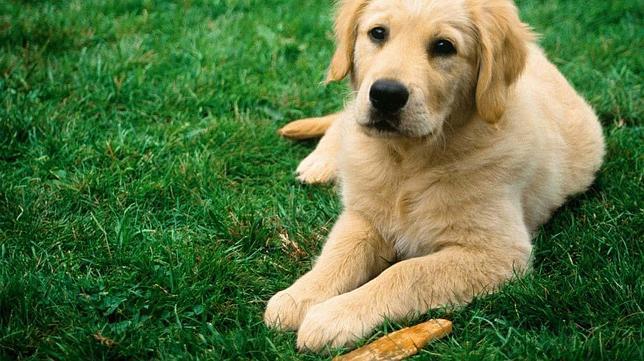 Los 7 alimentos que no deberíamos dar a nuestro perro
