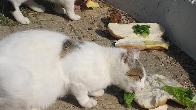 Multas de 300 euros para quien alimente a  animales abandonados