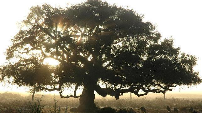 El CSIC cataloga 43 árboles y 9 arboledas singulares de