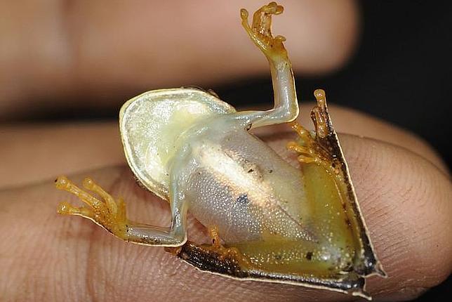 Descubren un paraíso con 46 nuevas especies en Surinam