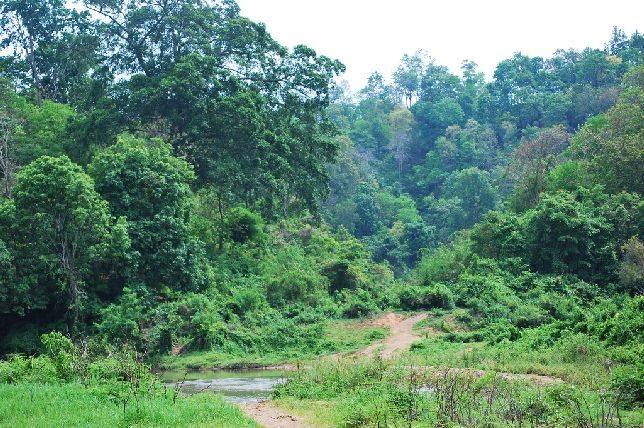 La naturaleza se muestra en toda su frondosidad en esta zona de ...