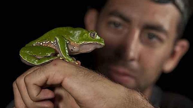 Hallan 365 nuevas especies en Perú