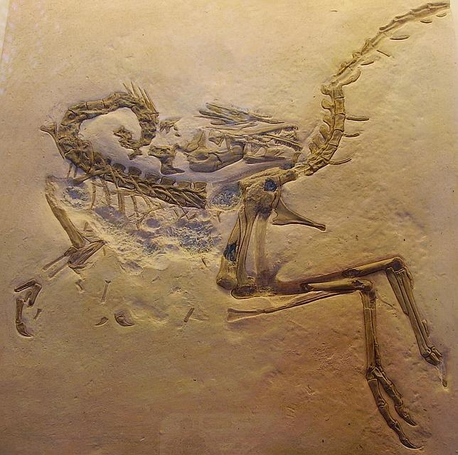 ¿Por qué los dinosaurios morían en posturas tan raras?