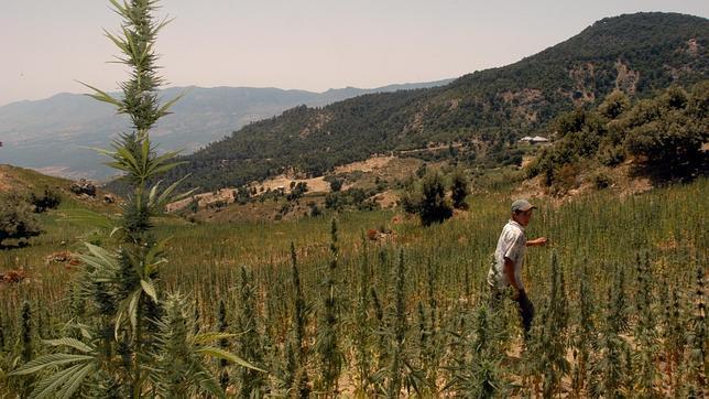 Un pueblo de Tarragona, dispuesto a instalar una plantación de cannabis para paliar su deuda
