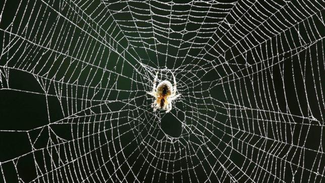Tela de araña para fabricar cuerdas de violín
