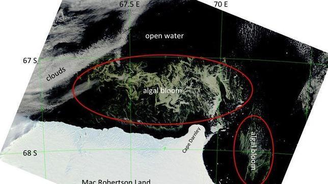 Localizan un enorme campo de algas en aguas antárticas Algas-antartida--644x362