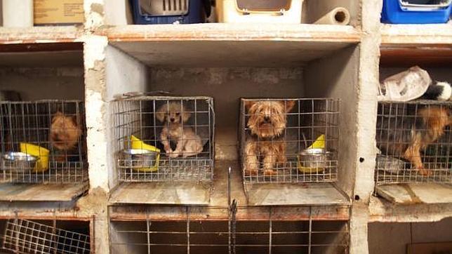 La ruta del tráfico europeo de perros