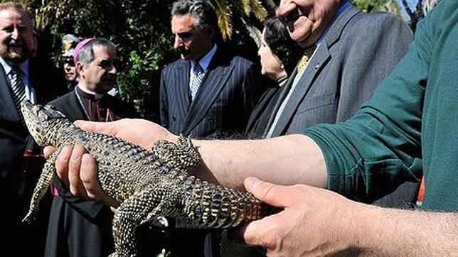 El «cocodrilo del Papa» vuelve a Cuba