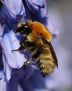 Un pesticida común, culpable de matar a las abejas