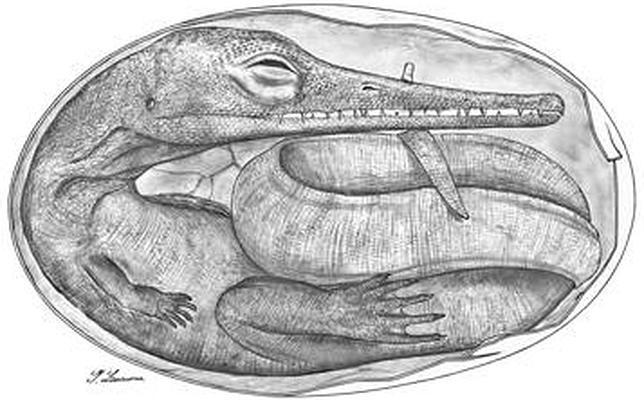 Los embriones de reptil más antiguos jamás encontrados
