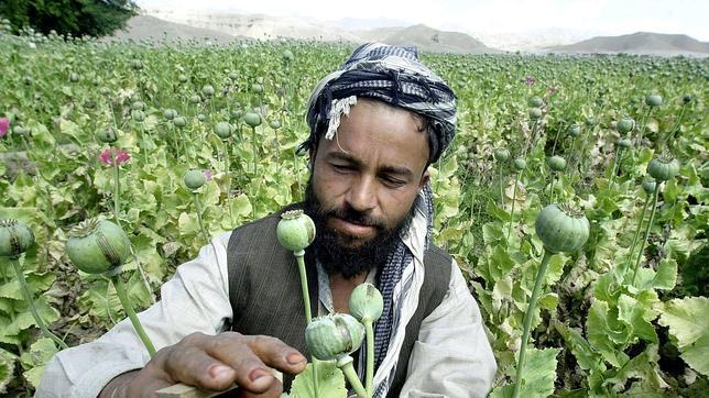 Opio, la gran batalla perdida en Afganistán