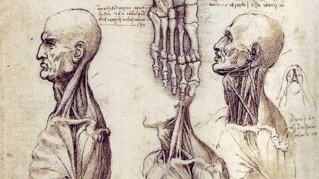 Fragmento de algunos de los dibujos de anatomía de Leonardo. ABC