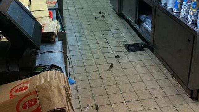 La cadena de comida r pida quick se enfrenta a unos - Comida para ratones ...