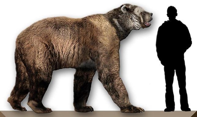 oso-cara-corta--644x382.jpg
