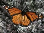 Diez de los 34 «puntos calientes de biodiversidad» que alberga la Tierra
