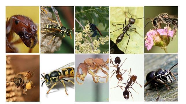 Las diez picaduras de insecto m s dolorosas - Insectos en casa fotos ...