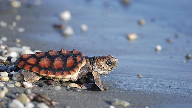 La tortuga fósil hallada en el Parque Güell cuestiona la clasificación de especies