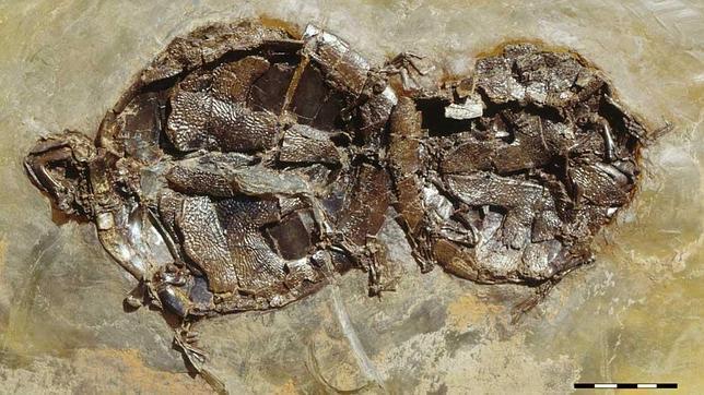 Un coito que dura 47 millones de años