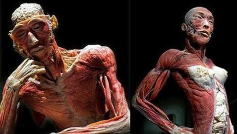 Las veinte partes del cuerpo humano que resultan completamente inútiles