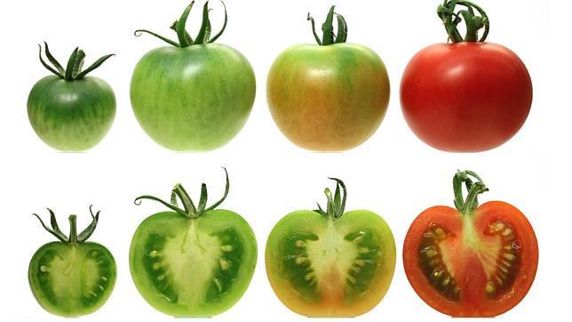 ¿Por qué los tomates del súper saben a cartón?