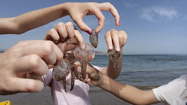 Falsos mitos para curar las picaduras de medusa