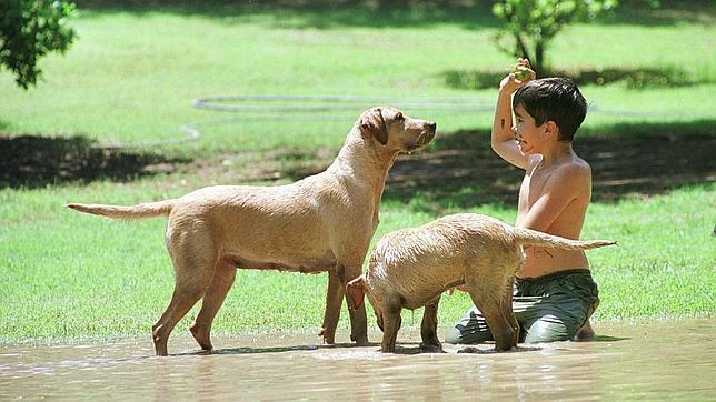 Los bebés que crecen con perros enferman menos - ABC.es