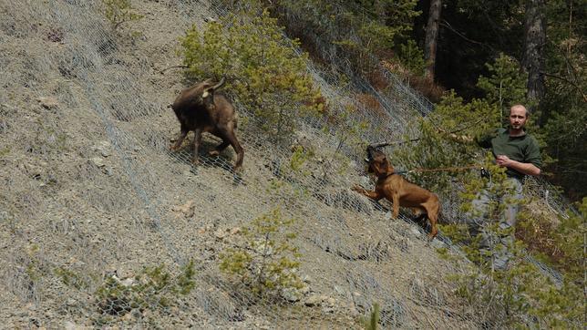 Perros adiestrados detectan animales enfermos a kilómetros de distancia