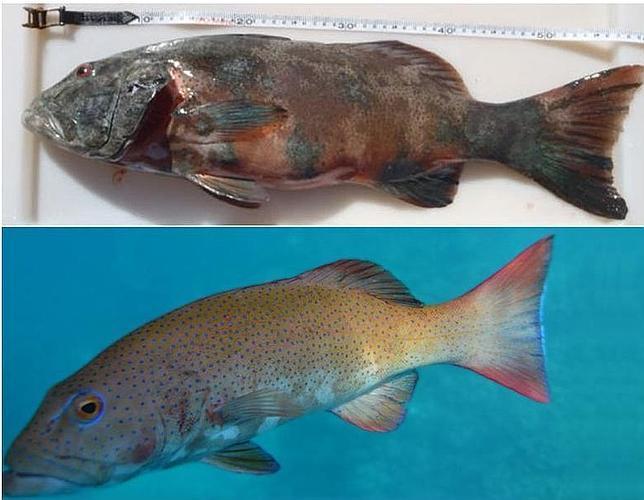Descubren los primeros peces con cáncer de piel