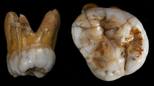 Confirman la existencia de una nueva especie humana, «hermana» de los neandertales