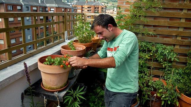 plantar tomates en el asfalto cmo montar un huerto en la terraza de tu piso - Huertos En Terrazas